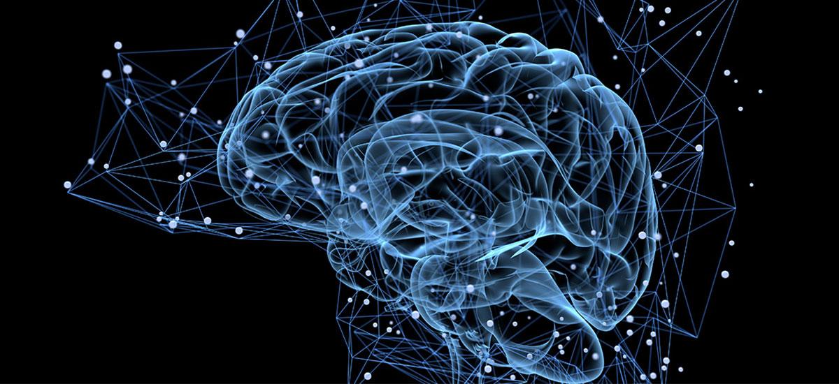 الدماغ و الأعصاب